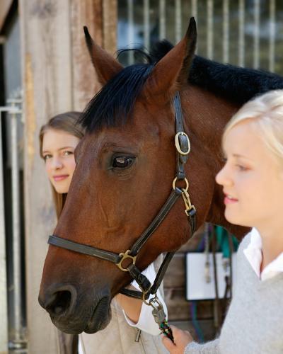 konie-kaszuby
